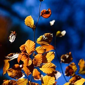 D850/810 Combo Autumn, Scotland