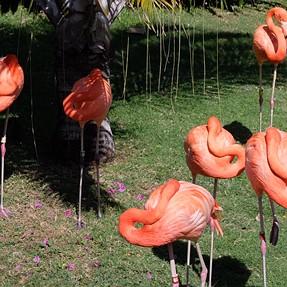 x30 at Honolulu Zoo