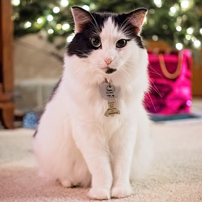 :-)) Sunday Cat! #534 January 7, 2018 ((-: