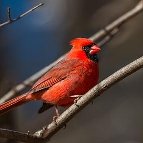 Birds - CC Please.