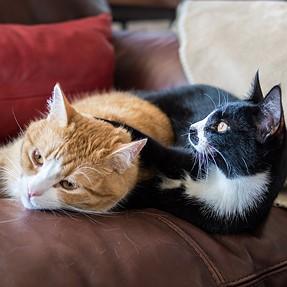 :-)) Sunday Cat! #543 March 11, 2018 ((-: