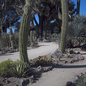 RX0: Stanford Cactus Garden in 4K and HDR
