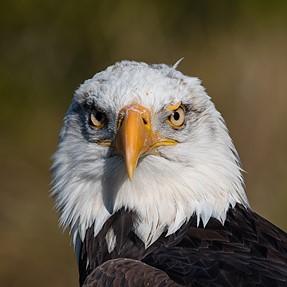 500mm f/5.6E PF does Birds of Prey