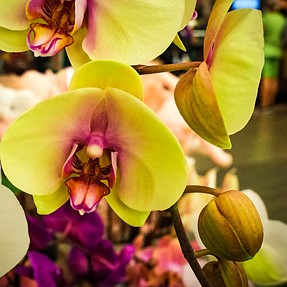 Orchids and nice l...