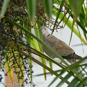 FZ1000 MkI - Nesting Doves