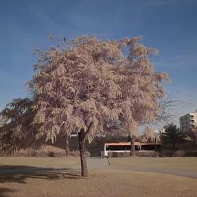 Infrared Converted Ricoh GR2 (Two Photos)