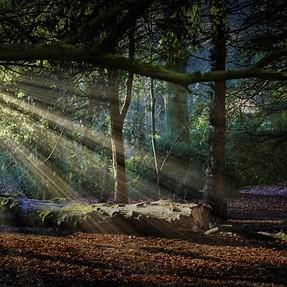 Woodland walk in Apley Park Telford