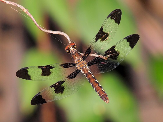 Re: dragonfly: Olympus SLR Talk Forum: Digital Photography Review