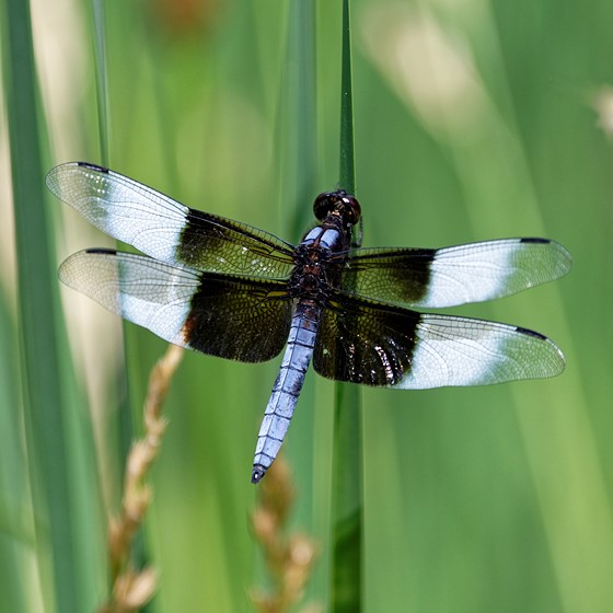 Dragonfly: Nikon Z Mirrorless Talk Forum: Digital