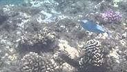 Olympus TG-2 underwater sample video