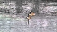 Samsung Galaxy Camera 2 goose sample video