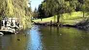 Fujifilm X20 Duck Pond Sample Video