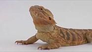 PIX2015 - Sigma - Curious Critters