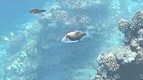 Nikon Coolpix AW110 underwater sample video #1