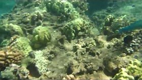 Canon PowerShot D20 Underwater Sample Video
